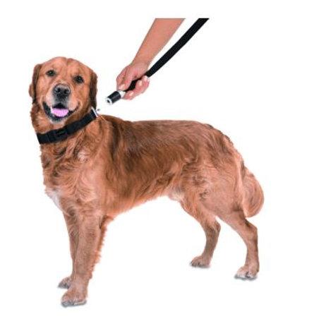 GoLeyGo Hundeleine und Halsband für Hunde, Größe L, schwarz, 1 St
