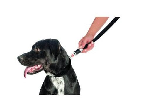 GoLeyGo Hundeleine und Halsband für Hunde, Größe S, schwarz, 1 St