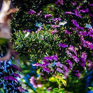 brotos & flores - a flora cresce e floresce na pandemia
