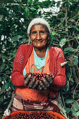 Guatemalan Coffee picking 2.JPG