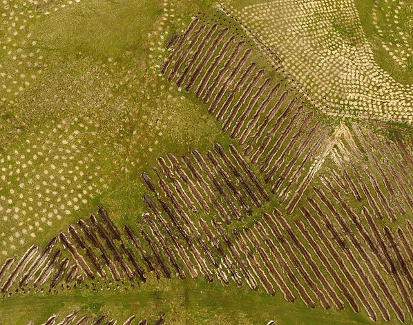 Forestry new planting aerial image