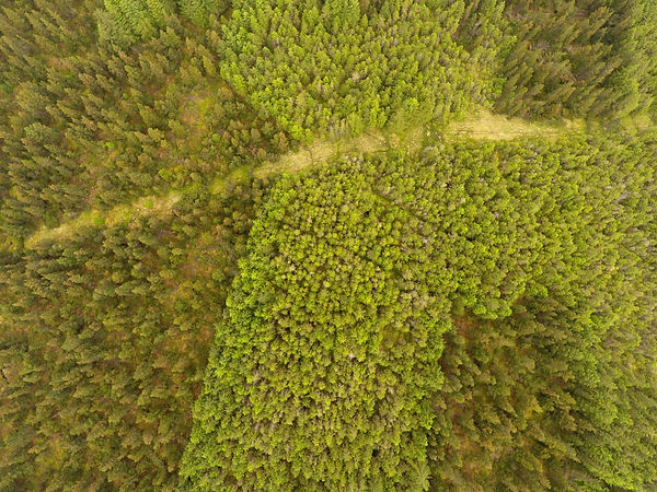 Forestry aerial image Scotland