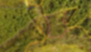 Windblow aerial map Scotland