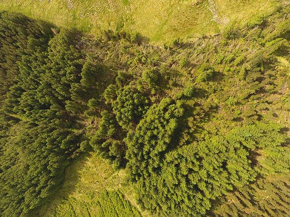 Windblow aerial image Scotland