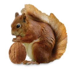 squirrel-with-a-nut-new