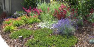 GTLA web native plants