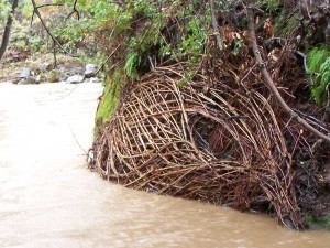 Join Artist Daniel McCormick To Create a Living Sculpture at Adobe Creek