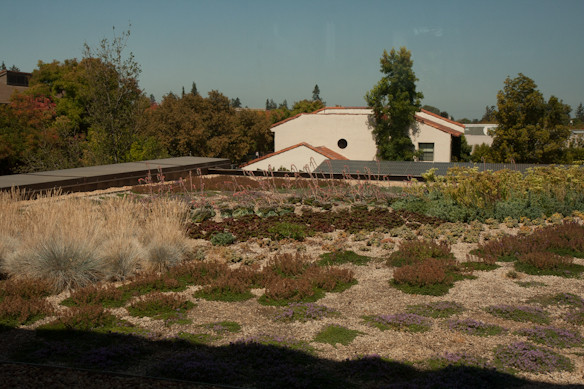 Living roof at Packard Foundation