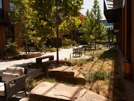 Drought-tolerant Landscaping at the Packard Foundation Building