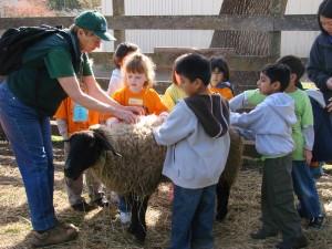 Meeting a Sheep