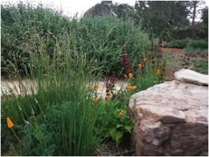 Native gardens can make you a neighborhood stuperstar!