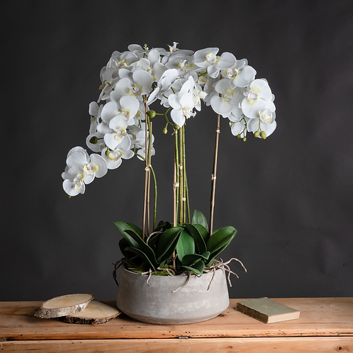 LARGE WHITE ORCHID