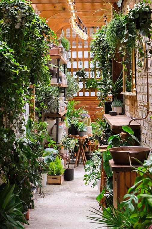 ellas-brunch-fulham-road-plants-