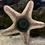 Thumbnail: Reef Grazers Algae Disks