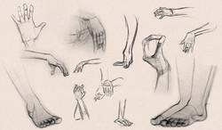 Hand and Feet Studies