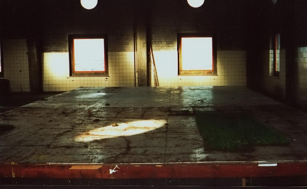 DZ_AmerikaHGrass5foor1999.jpg
