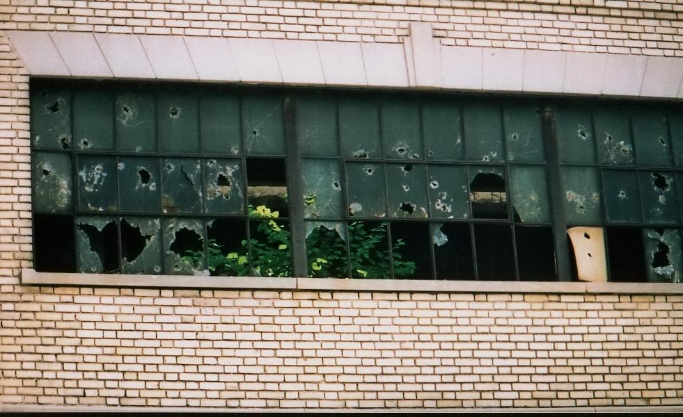 DZ_Detroit2000nature.jpg