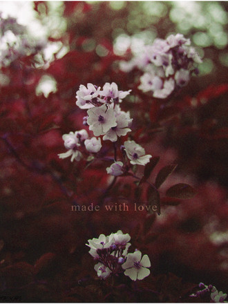 multiflora rose mulberry