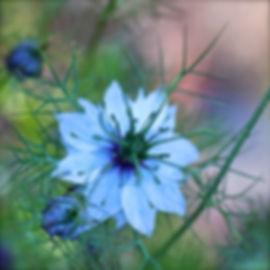 IMG_9063 _Snapseed.jpg