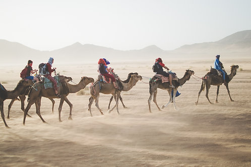 Camel tour + Overnight camp fire & BBQ in the ranch