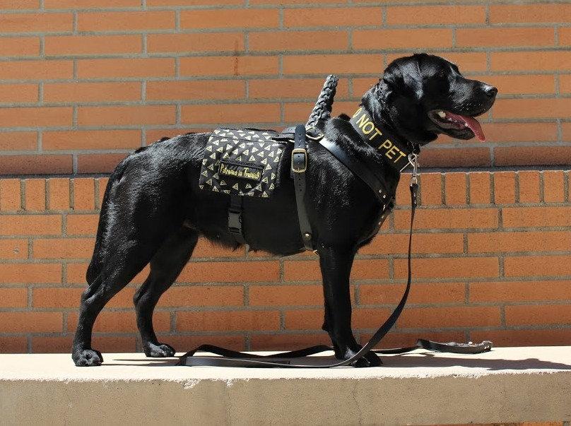 Service Dog Foundation