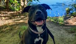 Nova on a Happy Tail Walk
