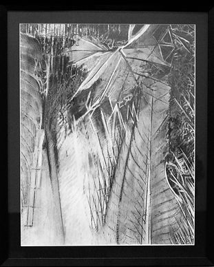 Chuck Wissinger Graphite drawing Leaves.