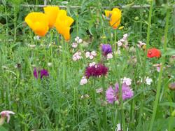jachére fleurie