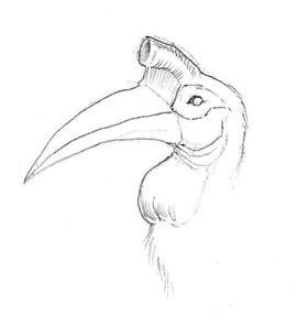 Little Hornbill