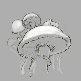 Madcap Mushrooms