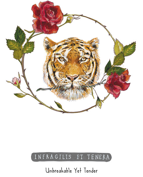 גלויות מהסידרה הלטינית
