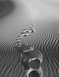 Dune steps