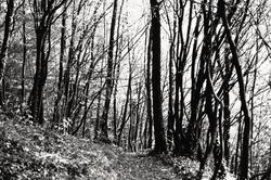 Ardennes hiking