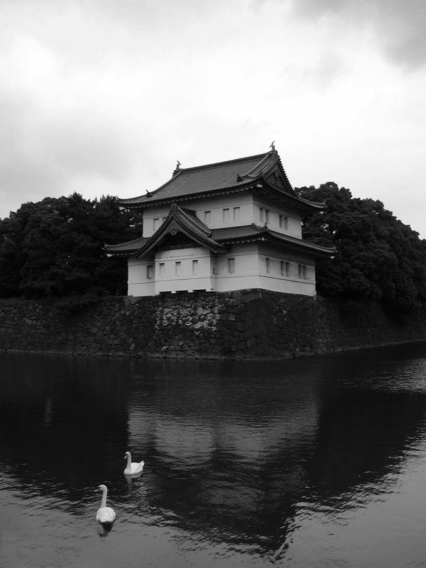 Tokyo swans