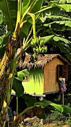 Banana hut