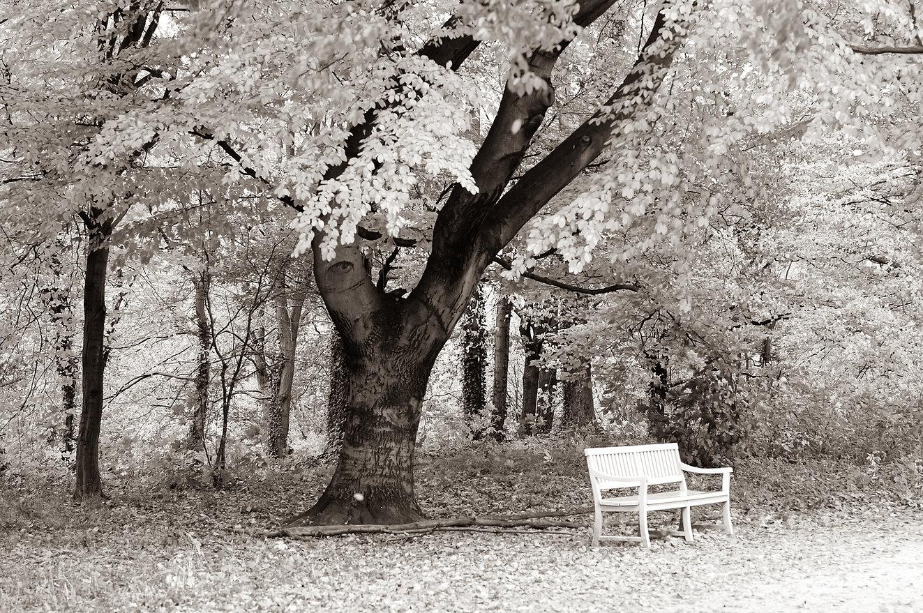 Augen-Baum ©Johannes Ratermann