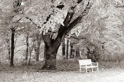 Baum mit Auge, weisse Bank; Berlin ©Johannes Ratermann