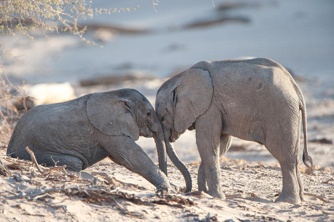 Elephantbabies, Desert, Hoanib, Namibia ©Johannes Ratermann