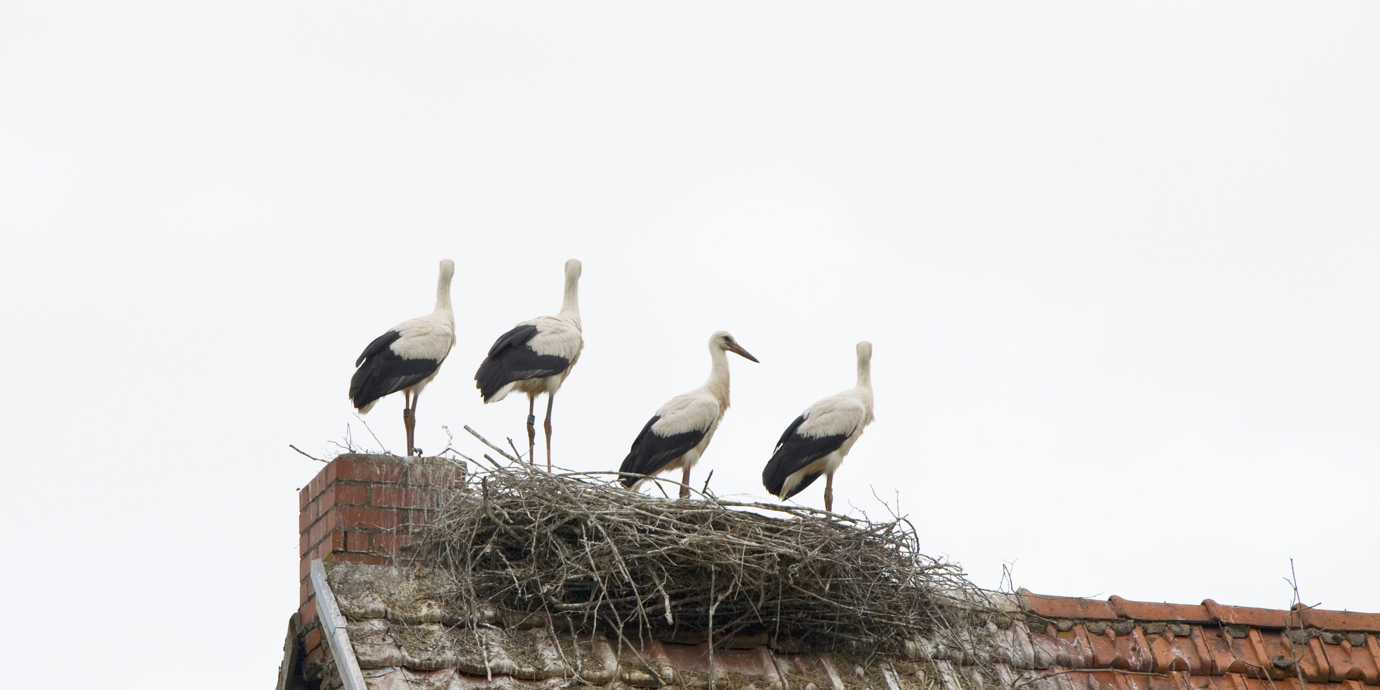 Young Storks II, DE ©Johannes Ratermann
