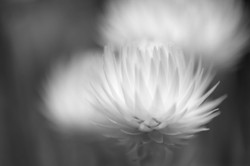 Unknown White Plant ©Joh. Ratermann