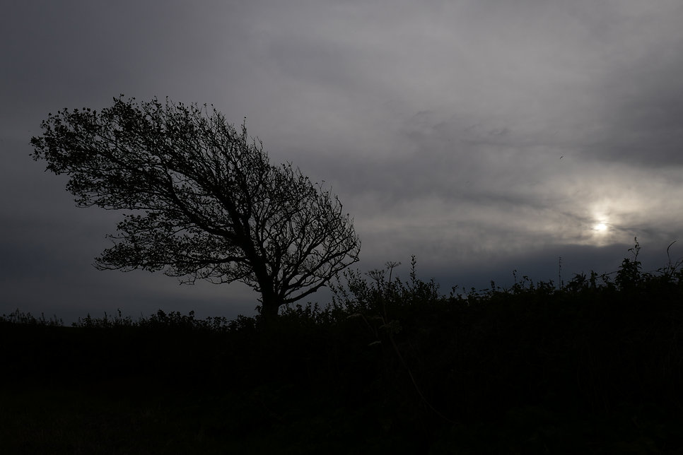 Windswept Tree in the early evening ©Johannes Ratermann