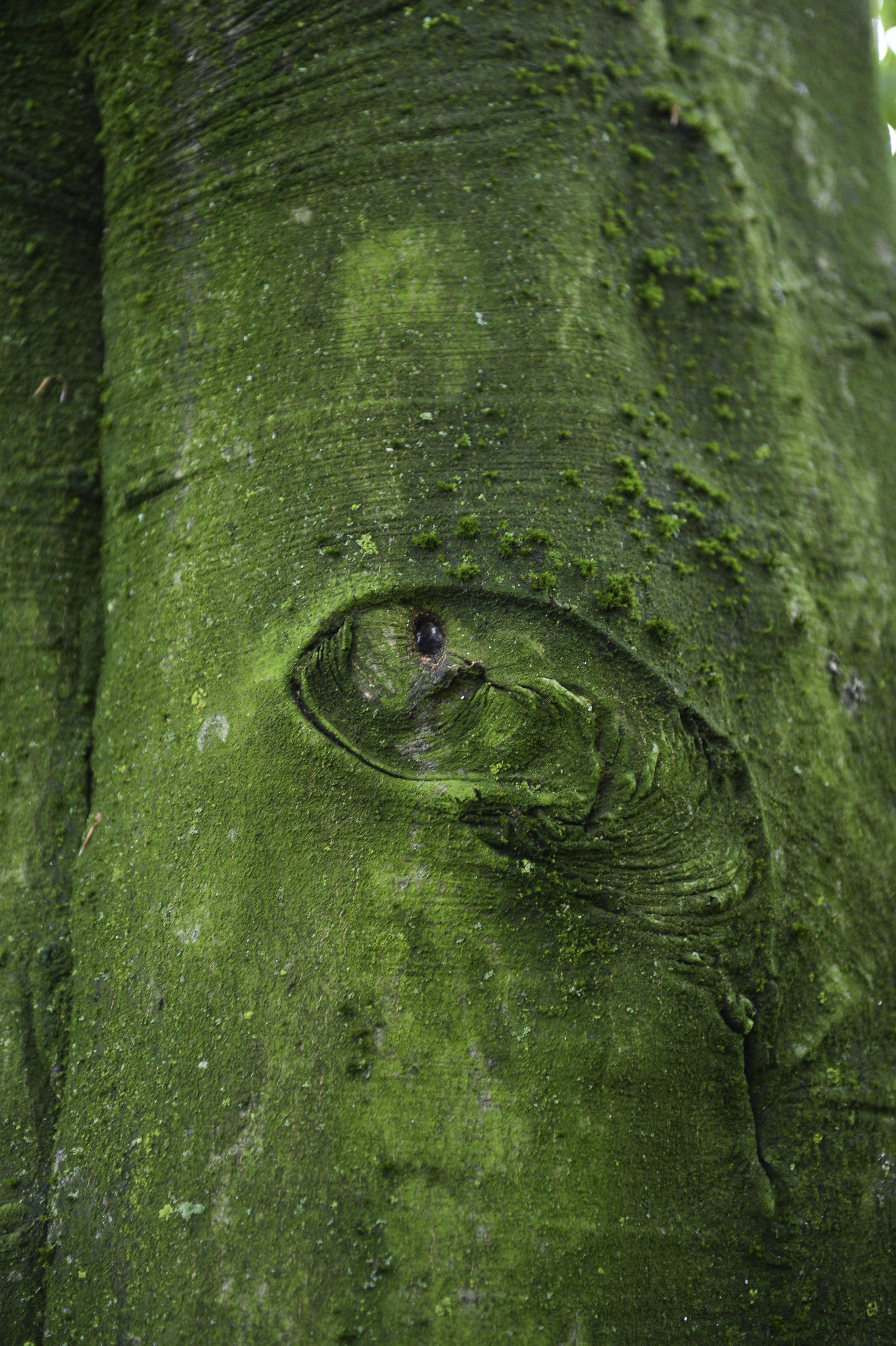 Baum-Kletterer DSC_8488.jpg