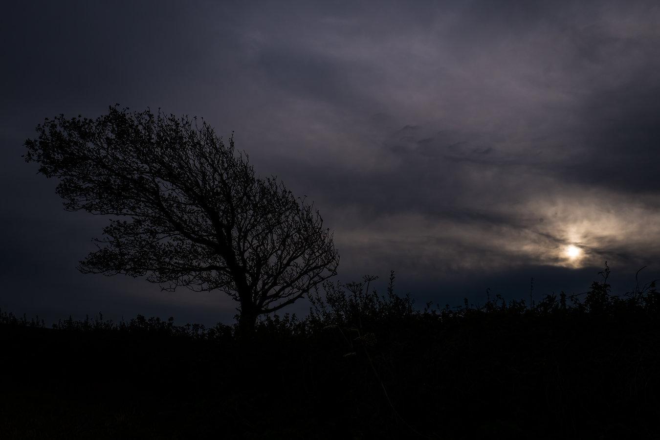Gebeugt vom Wind; Cornwall ©Johannes Ratermann
