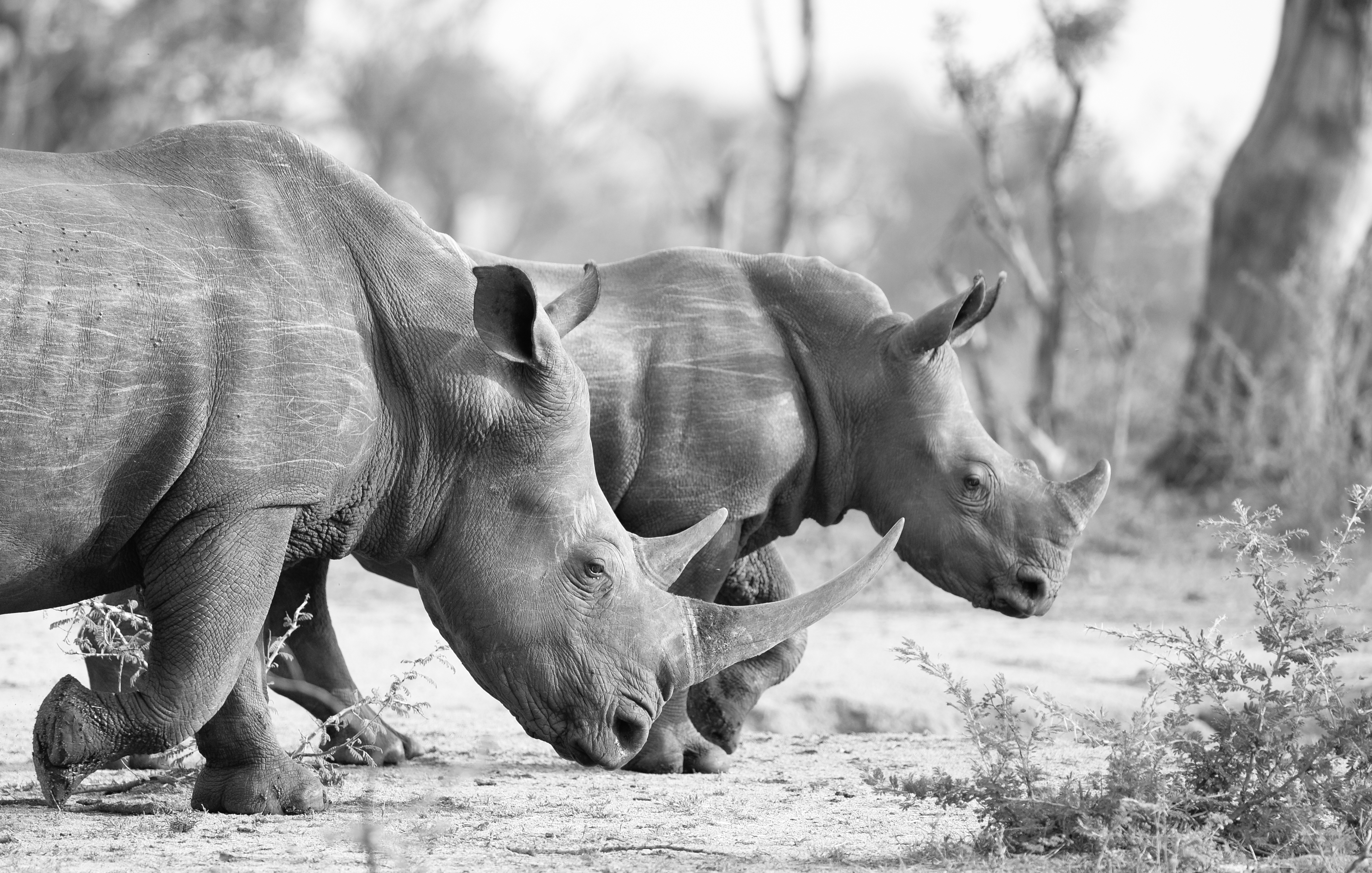 Female rhino with baby rhino _Johannes Ratermann