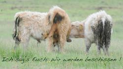 Wir werden beschissen! GB SCT ©Johannes Ratermann