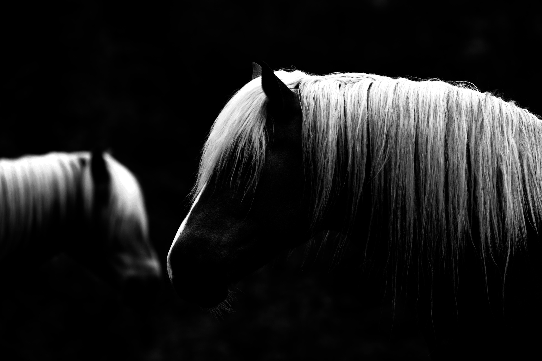 Pferde nahe Gut Schildschweig ©Johannes