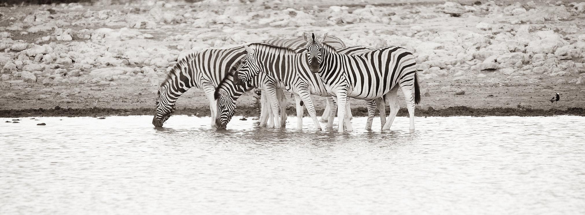 Zebras am Wasserloch, östliche Etoshapfanne, Namibia ©Johannes Ratermann