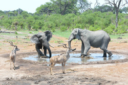 Elephants struggeling, Kudus nearby, BA ©Johannes Ratermann