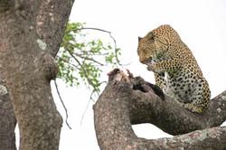 Leopard, South Africa ©Johannes Ratermann