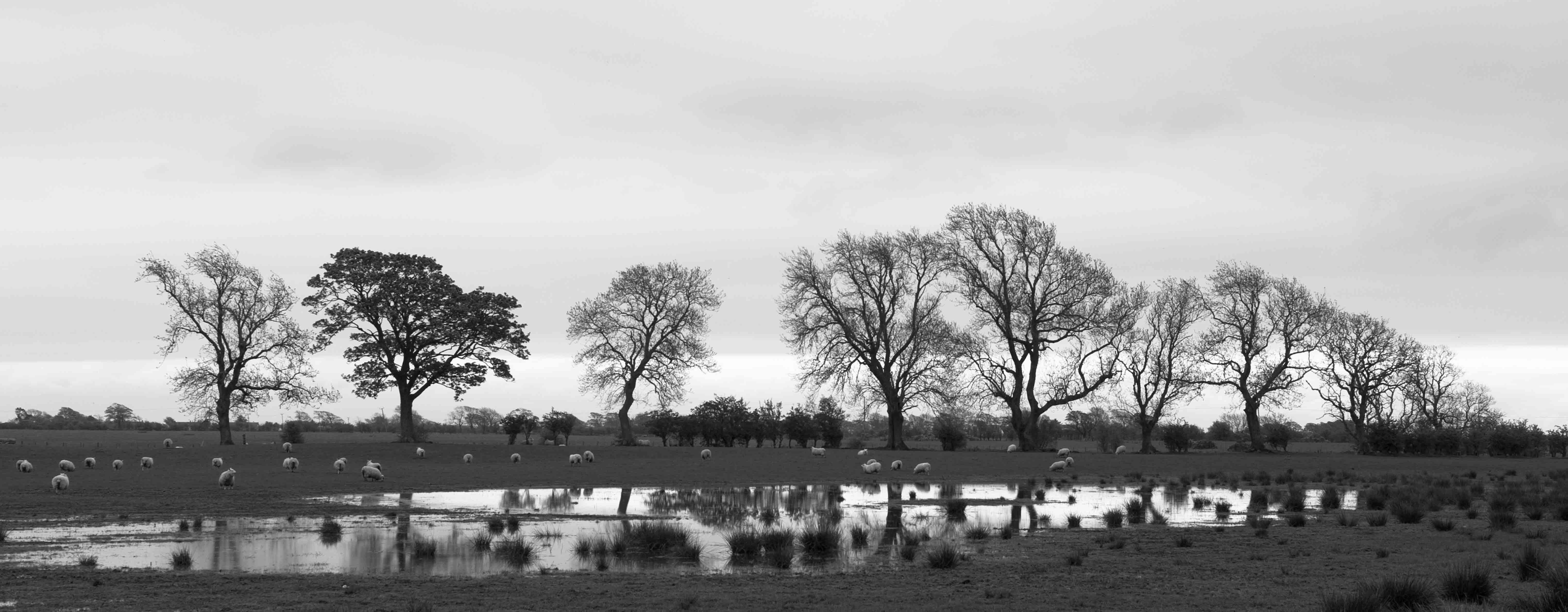Bäume im Mai bei Caerlaeverock Castle ©Johannes Ratermann